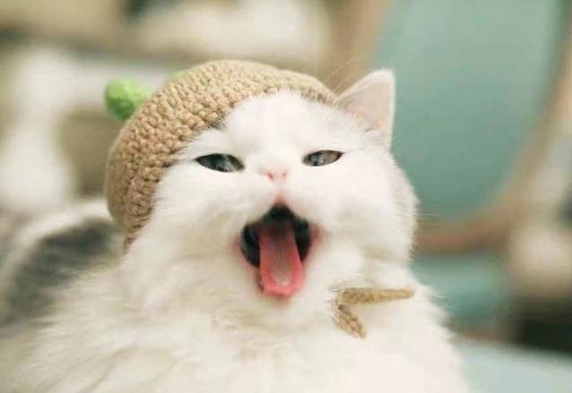 萌猫猫图片_萌猫猫图片大全可爱_萌宠猫猫侧脸图片_之