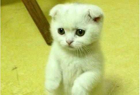 萌猫猫图片(2)