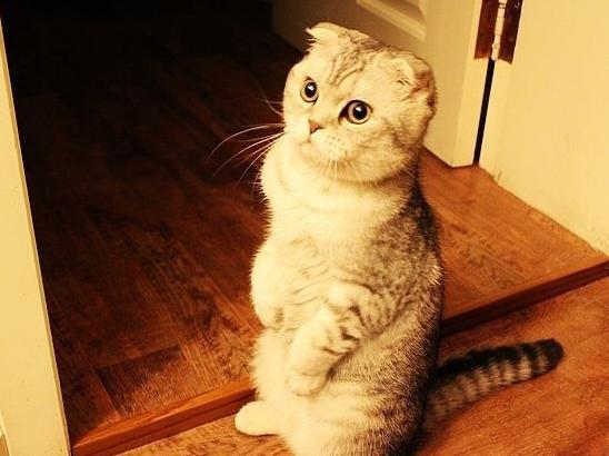 宠物频道 动物图片  卖萌又可爱的小猫谁人会不爱呢?