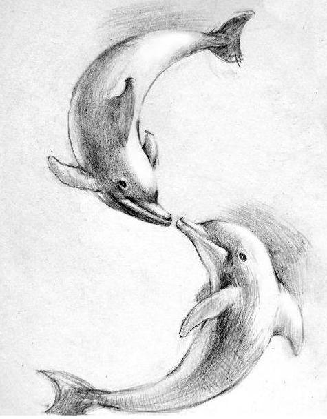 海豚素描图片 -简笔画