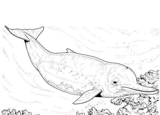 海豚素描图片