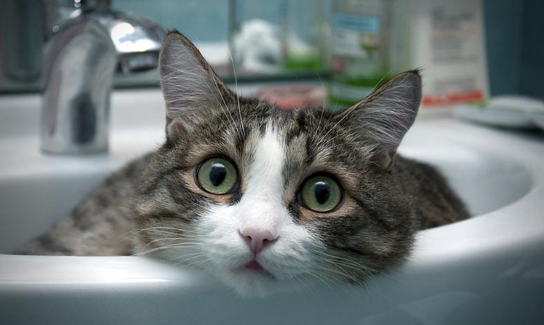 猫咪图片_手绘猫咪图片_家猫_霸气猫咪图片 -动物图片