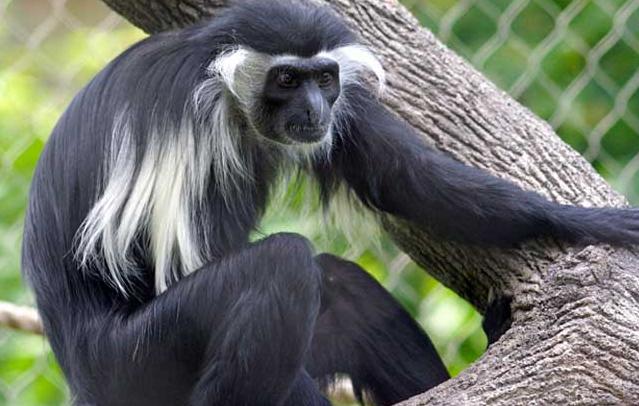 猴子图片 -动物图片