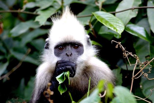 其实猴子的种类有很多,接下来小编要给大家带来猴子品种名称及图片