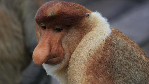 猴子图片 (4)-动物图片