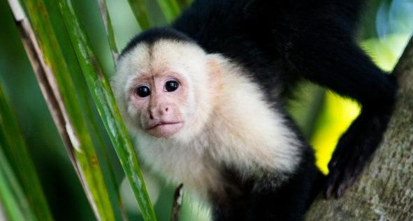 我们经常会在动物园看到猴子,但那只是一小部分,其实猴子的种类有很多