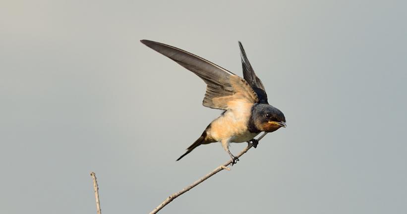 会飞的动物合集图片