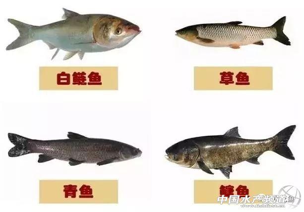 鱼的种类不同,适宜生长的水域不同,摄取食物的水层也不同。水域可分为上、中、下三层。鲢鱼,鲌鱼,鳙鱼多在水的上层寻找食物,草鱼,鳊鱼,多在水的中层找食物,鲫鱼,鲤鱼,青鱼,鲶鱼在水的底层摄食。    二、淡水鱼类的幼鱼食性    大多数鱼类的幼鱼食性基本相同。从鱼卵中孵出的鱼苗都以卵黄囊中的卵黄为营养。幼鱼开食时,觅食小型的浮游生物以及豆浆、熟蛋黄水等。随着小鱼的生长,开始觅食大型的浮游生物、无节幼体、小型枝角类水生生物以及人工投饵。    三、淡水成年鱼类的食性    随着鱼体的生长,鱼的食性开始分