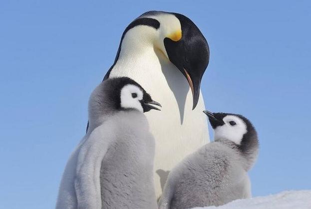 企鹅图片_qq企鹅图片_企鹅图片大全_儿童画企鹅图片