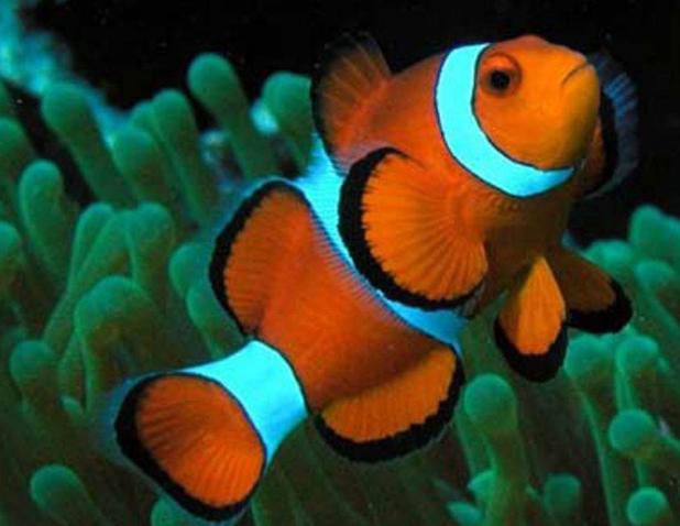 海水观赏鱼图片 (3)-动物图片