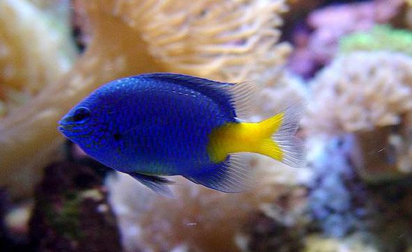 海水观赏鱼图片 (4)-动物图片