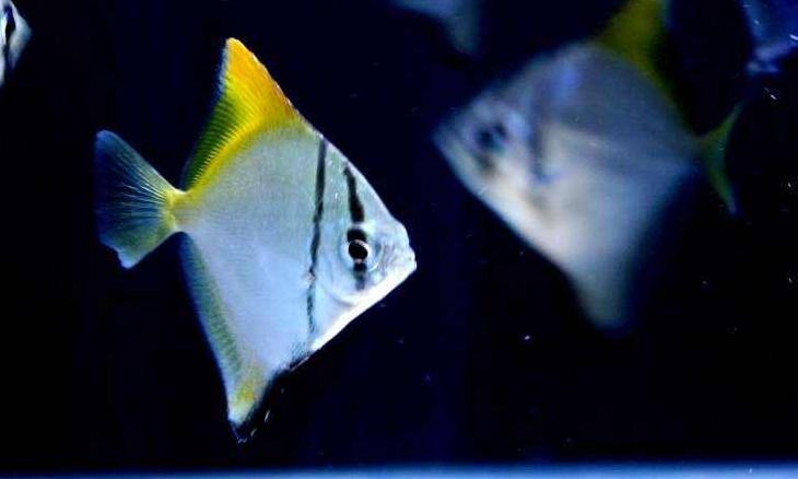 小型观赏鱼种类图片 -动物图片