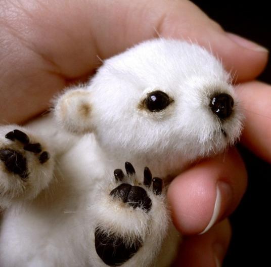 频道鹦鹉动物图片我们都是到北极熊是生活在a频道的北极,而小北极宠物贝烧烤图片