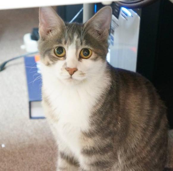 宠物频道 动物图片  看到这些小猫咪是不是觉得非常卖萌很可爱,不经