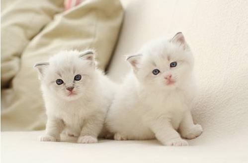 看到这些小猫咪是不是觉得非常卖萌很可爱,不经心里涌起一股想要养小