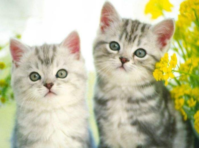 小猫咪图片_爱找借口的小猫咪图片_gif猫咪小图片_小