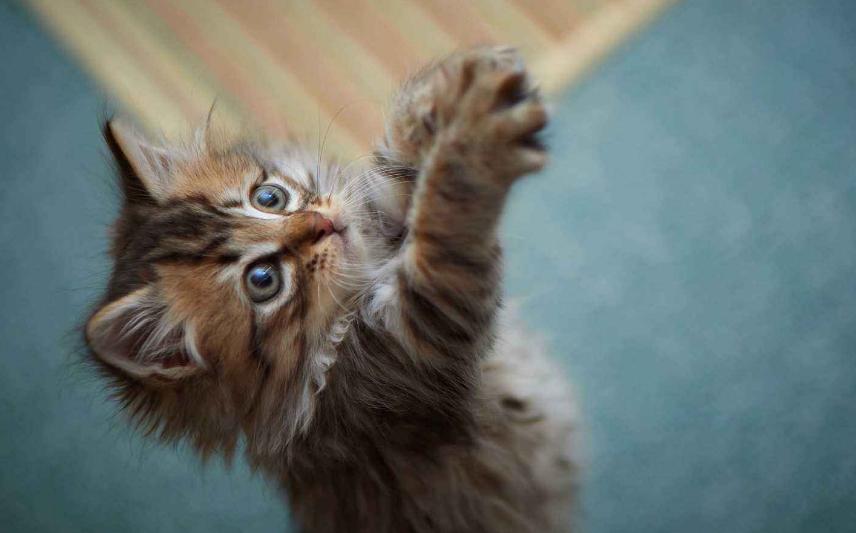 可爱小猫咪图片(3)