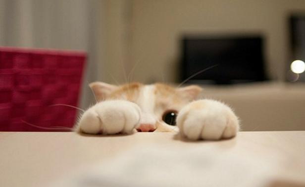 可爱猫咪图片 -动物图片