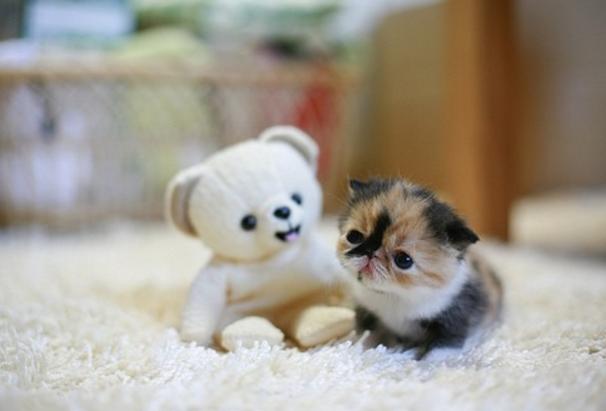 宠物频道 动物图片   猫咪性情乖巧温顺,而且在民间也有猫有九条命的