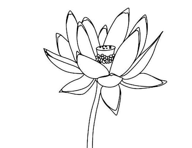 植物简笔画
