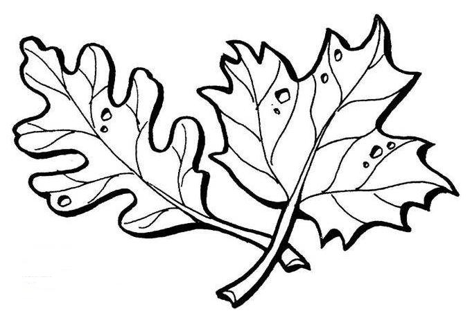 枫叶简笔画画法步骤