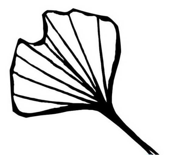 植物简笔画(2)