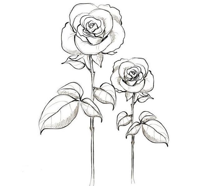 手绘玫瑰花简笔画的图片5