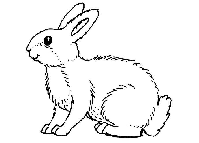 简笔画兔子 3