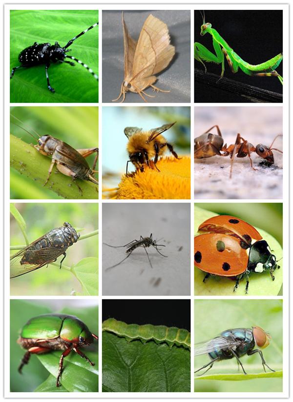 小虫子图片 -动物图片