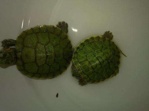 宠物频道 动物图片   乌龟有大有小,虽然看起来都可爱,但是小乌龟还是