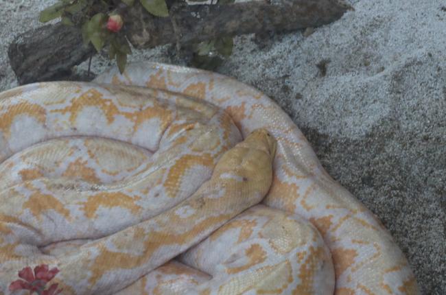 大蛇图片 (2)-动物图片