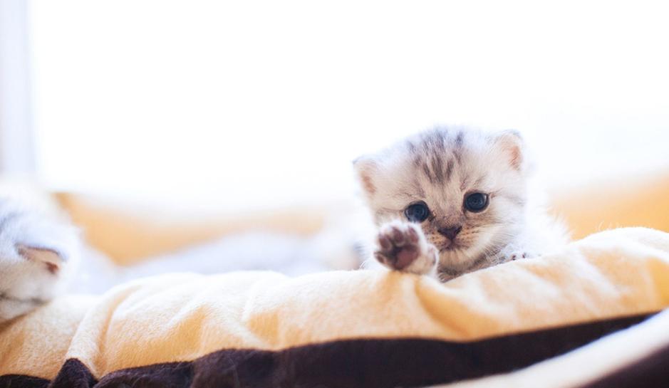 萌猫咪图片_萌宠猫咪_萌宠猫咪图片大全可爱_猫咪萌照
