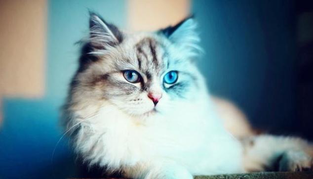 猫可爱萌照头像