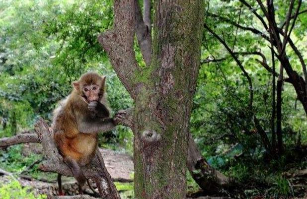 平时只能在动物园看到小猴子,所以今天小编带来可爱的小猴子图片大全