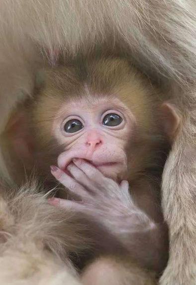 宠物频道 动物图片  成年的猴子可机灵调皮了,还是小猴子可爱呆萌,让