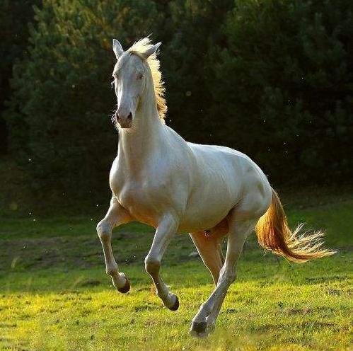 宠物频道 动物图片  汗血宝马是马类当中最纯种少有的,每一匹的汗血