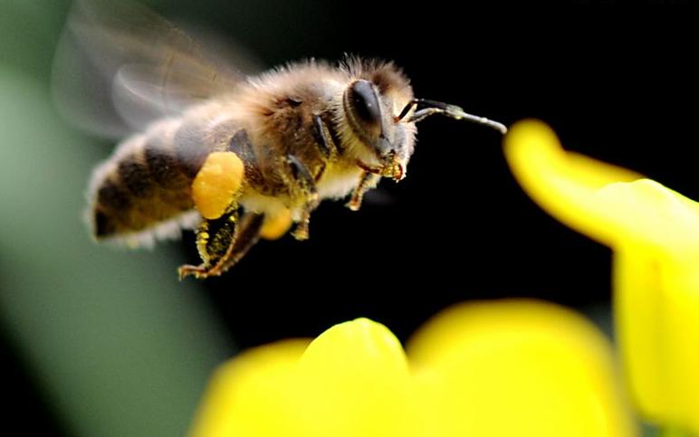 小蜜蜂图片-动物图片狮子座的漫画人物图片