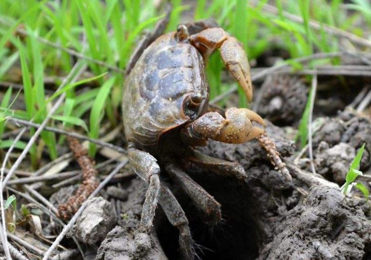 螃蟹图片_龙虾_虾图片_国画螃蟹图片 -动物图片