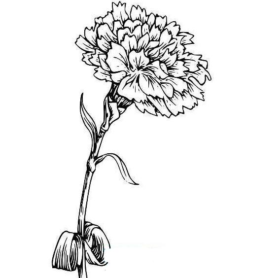 没有真花画康乃馨的简笔画也是很好的,但你知道如何画康乃馨的简笔画