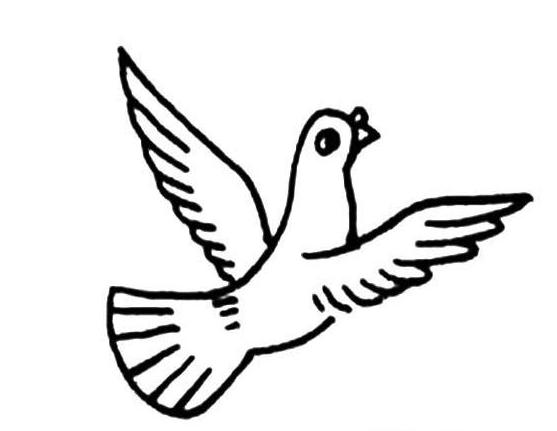 飞翔和平鸽简笔画-和平鸽简笔画图片
