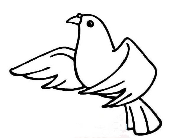 和平鸽简笔画