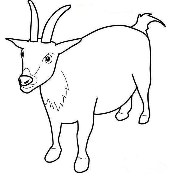 怎样画羊的简笔画-羊简笔画
