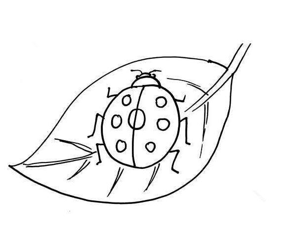 瓢虫简笔画_七星瓢虫简笔画教案_卡通七星瓢虫简笔画
