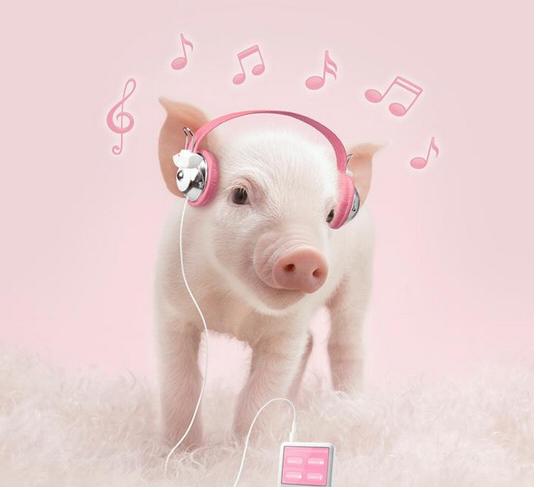小猪图片 (5)-动物图片