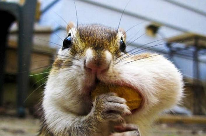 松鼠搞笑图片_魔王松鼠图片_松鼠的脚印图片_松鼠牙齿