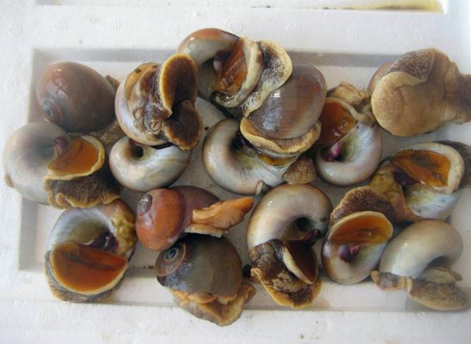 海鲜 美食 668_488