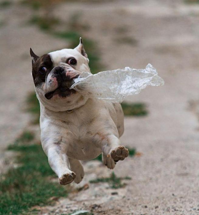 可爱动物图片带幽默字