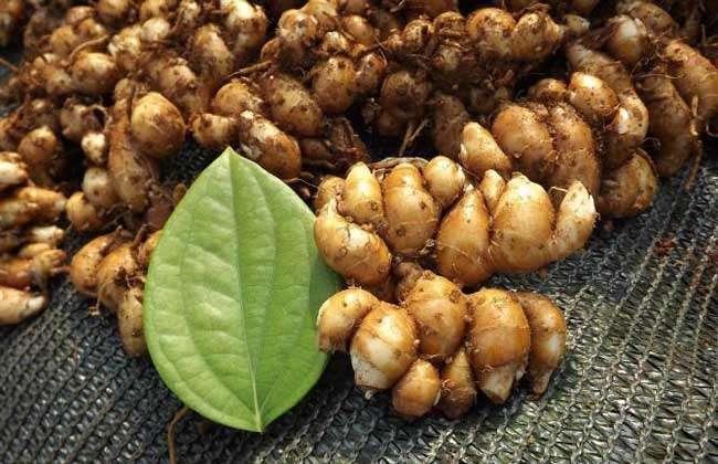 生姜,洋姜,山姜,沙姜的区别图片