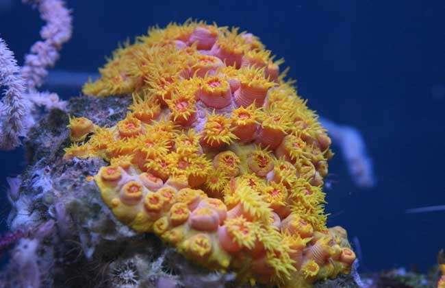 生物为生,在生长过程中能吸收海水中的钙和二氧化碳,然后分泌出石灰石