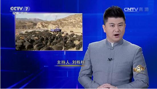 一头走进央视CCTV的猪 给千万用户发大红包